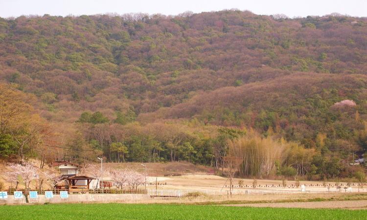 220賞田廃寺跡公園 2008春