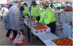 柿(箱入り)の販売
