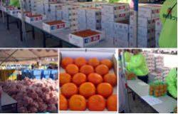 各種柿の販売