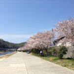 旭川河川敷の桜並木