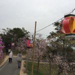 はっぽね桜まつり