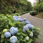 たけべの森公園(アジサイロード)