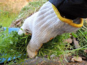 掃除と手袋