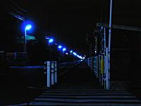 青色防犯街路灯点灯の様子