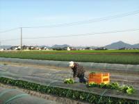 地域の圃場(レタス、玉葱、