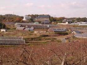 マスカットや桃の栽培が盛ん