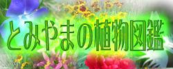 「散歩で見られる富山の草花・野草」のブログを、別ウィンドウに表示します。