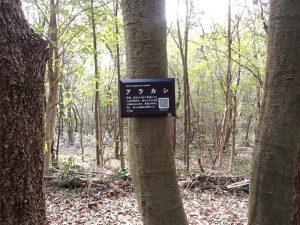 取り付けた樹木名ラベル
