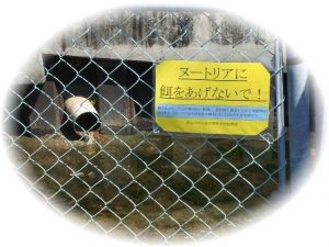 「エサをあげないで」の掲示と排水管