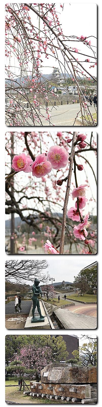 石山公園の枝垂れ梅咲きそろう